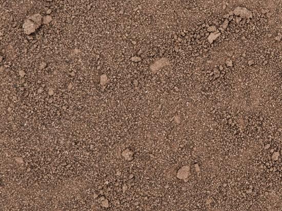 Phaeodactylum triconutum